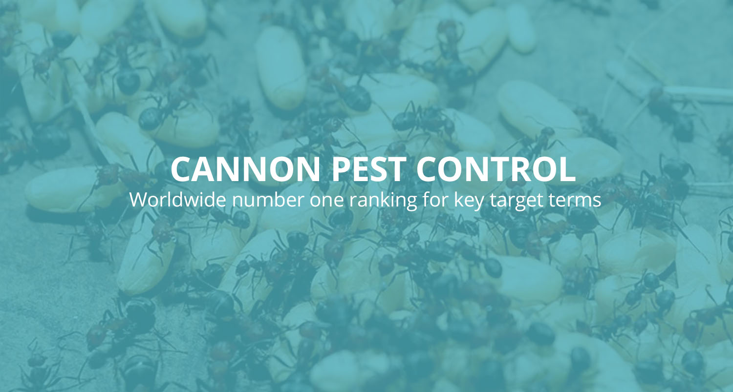 Cannon-Pest-Control-worldwide-keyword-rankings-banner.jpg