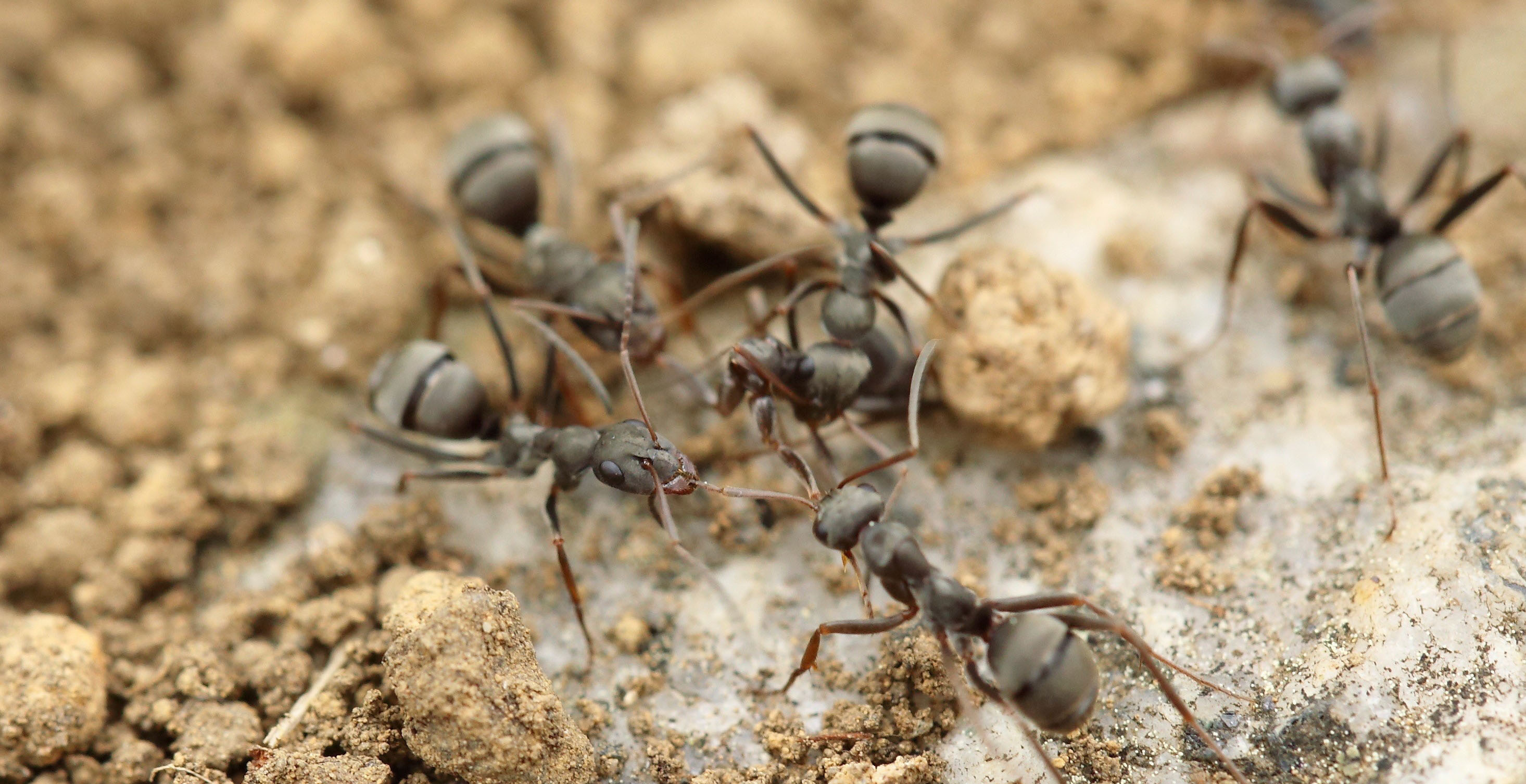Image-of-ants