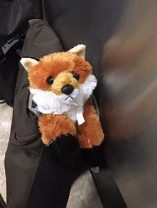 Meet Foxy!