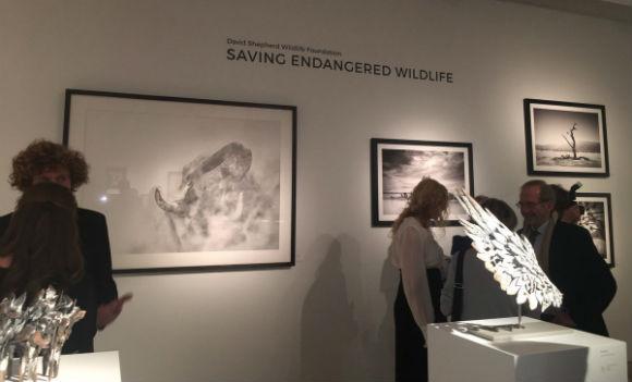 dswf art of survival exhibition