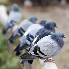 Pigeons Resting On Object