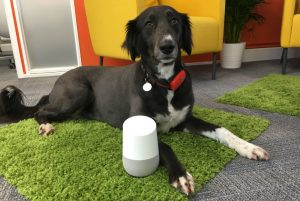 Poppy with Google Home