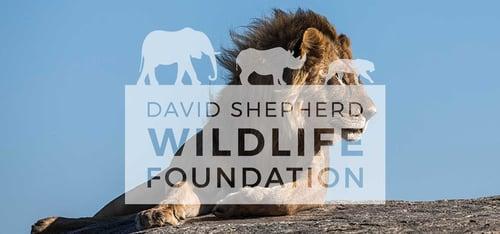 david-shepherd-wildlife-foundation-logo-over-a-lion