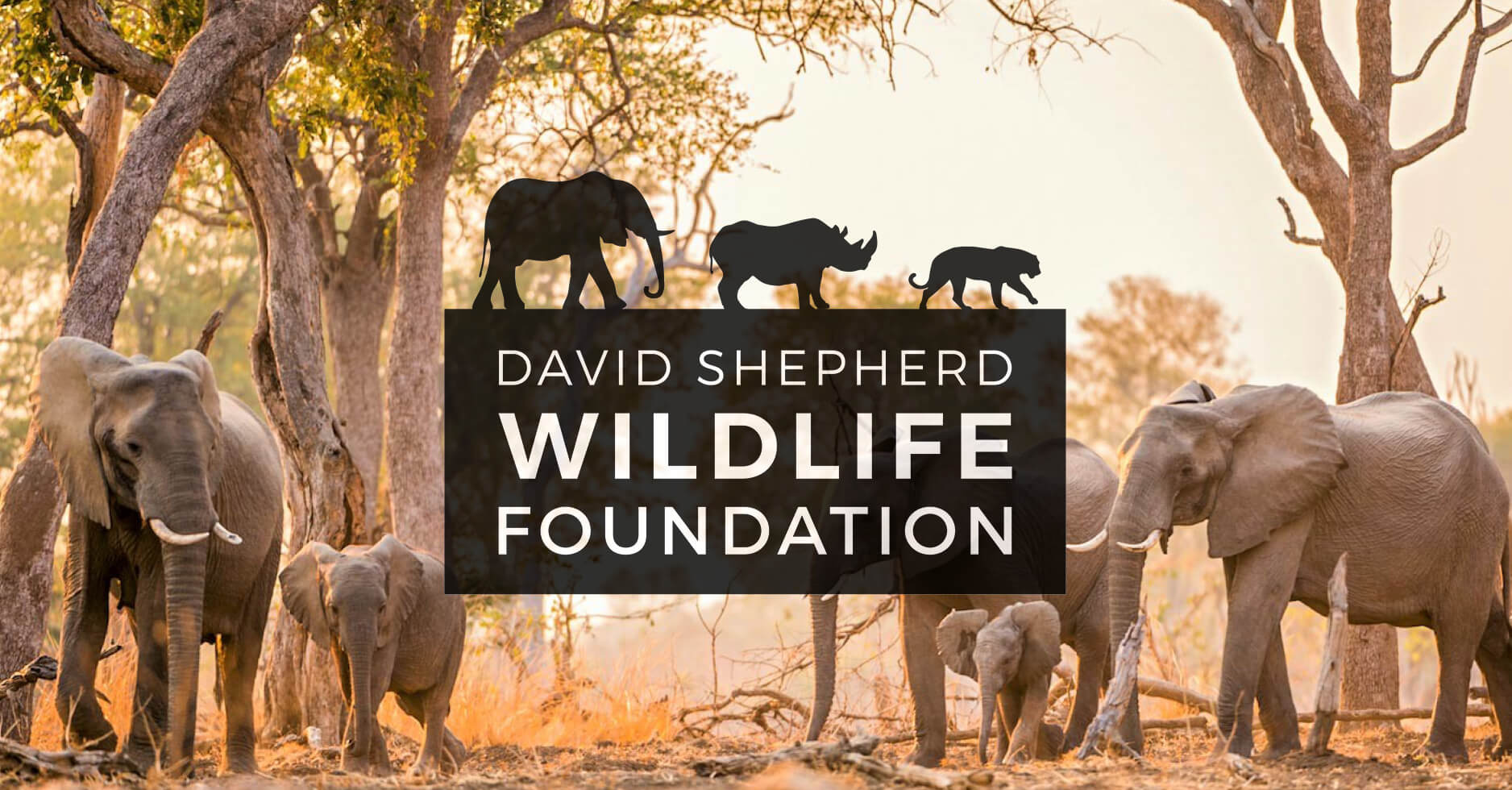 David-Shepherd-Wildlife-Foundation-Logo